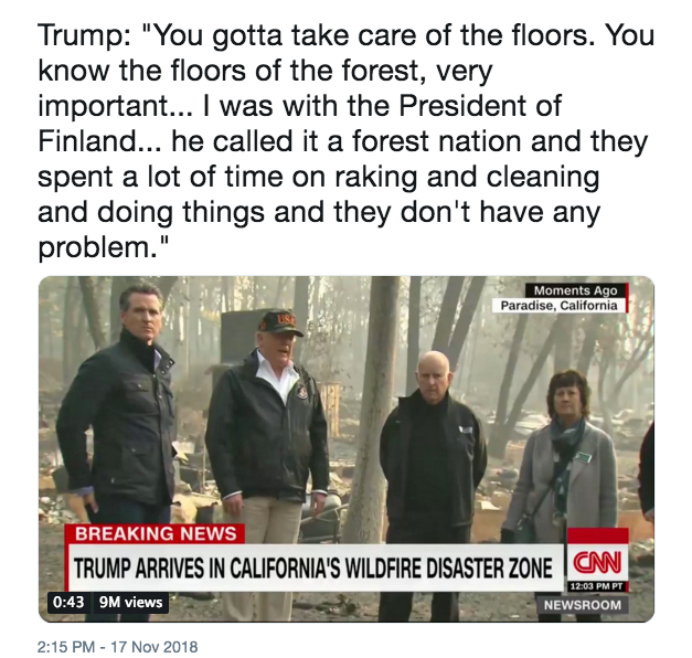 Trump raking the forest floor